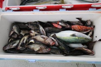 西岡遊漁の2021年4月23日(金)3枚目の写真