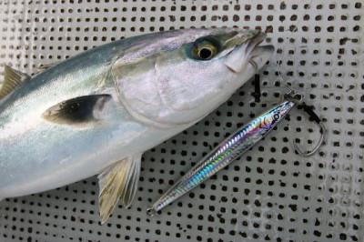 西岡遊漁の2021年4月23日(金)4枚目の写真