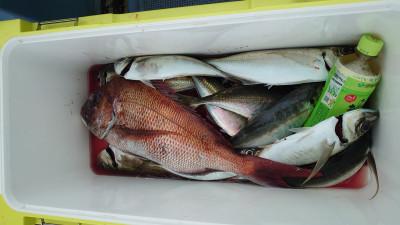 釣り船 秀進丸の2021年4月28日(水)4枚目の写真