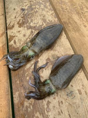 日乃出渡船の2021年4月28日(水)3枚目の写真