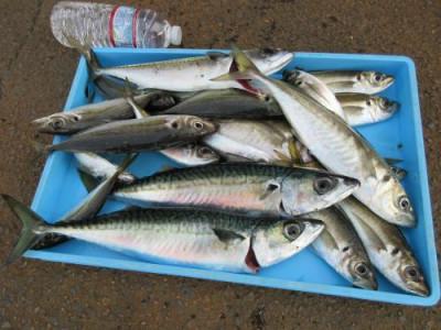 鈴木釣具店の2021年4月28日(水)1枚目の写真