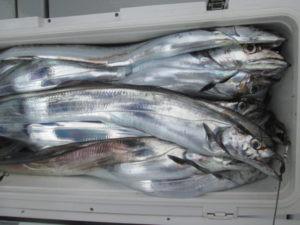 絢美丸の2021年4月28日(水)3枚目の写真