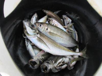 鈴木釣具店の2021年4月30日(金)1枚目の写真
