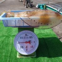 釣り船 久勝丸の2021年4月30日(金)5枚目の写真
