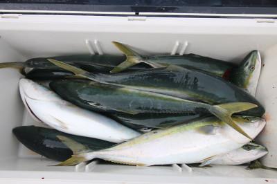 西岡遊漁の2021年4月29日(木)1枚目の写真