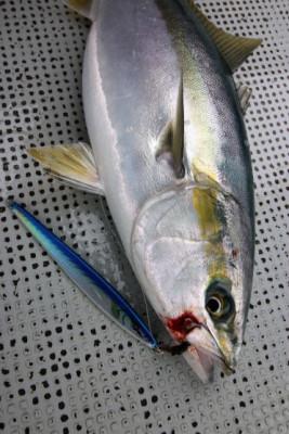 西岡遊漁の2021年4月29日(木)2枚目の写真