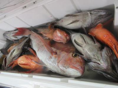 鈴木釣具店の2021年5月5日(水)1枚目の写真
