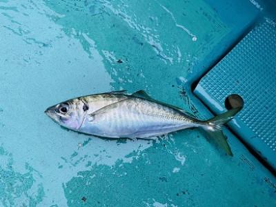 谷口釣船の2021年5月7日(金)3枚目の写真