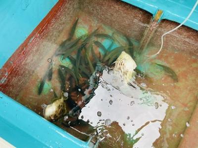谷口釣船の2021年5月7日(金)5枚目の写真