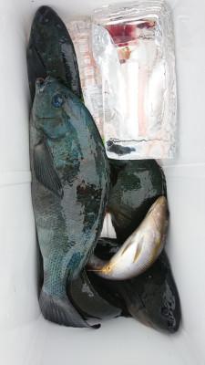 あづまや渡船の2021年5月8日(土)1枚目の写真