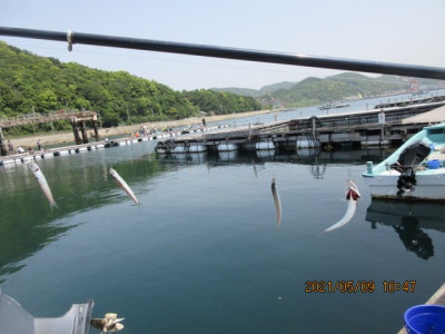 由良海つり公園&釣堀ランドの2021年5月9日(日)3枚目の写真