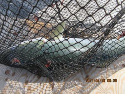 由良海つり公園&釣堀ランドの2021年5月10日(月)3枚目の写真