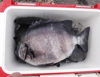 丸銀釣りセンターの2021年5月14日(金)4枚目の写真