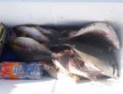 丸銀釣りセンターの2021年5月18日(火)3枚目の写真