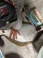 龍宮丸の2021年5月19日(水)2枚目の写真