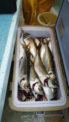 釣り船 秀進丸の2021年5月22日(土)3枚目の写真