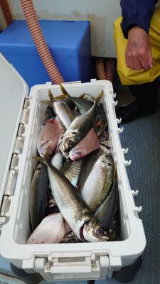 釣り船 秀進丸の2021年5月22日(土)4枚目の写真