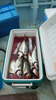 釣り船 秀進丸の2021年5月22日(土)5枚目の写真