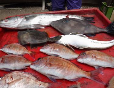 奥村釣船の2021年5月22日(土)5枚目の写真