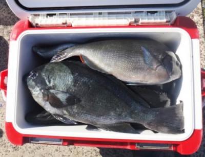 丸銀釣りセンターの2021年5月23日(日)4枚目の写真