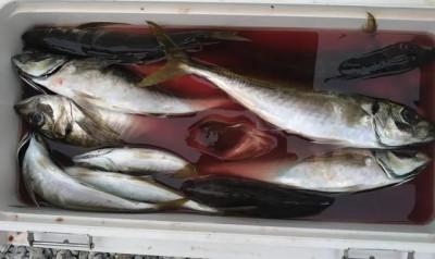 乙島丸の2021年5月26日(水)4枚目の写真