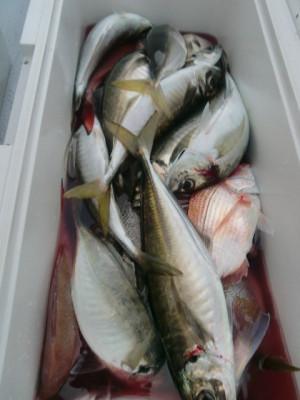 釣り船 みらいの2021年5月28日(金)2枚目の写真