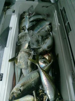 釣り船 みらいの2021年5月28日(金)4枚目の写真