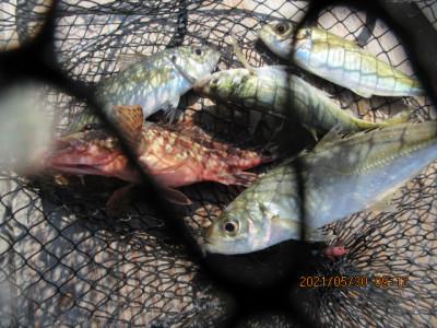 由良海つり公園&釣堀ランドの2021年5月30日(日)3枚目の写真