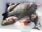 丸銀釣りセンターの2021年5月31日(月)2枚目の写真