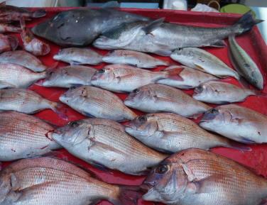 奥村釣船の2021年5月31日(月)5枚目の写真
