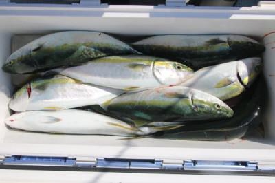 西岡遊漁の2021年5月29日(土)3枚目の写真