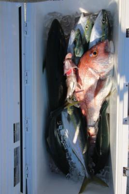 西岡遊漁の2021年5月29日(土)5枚目の写真