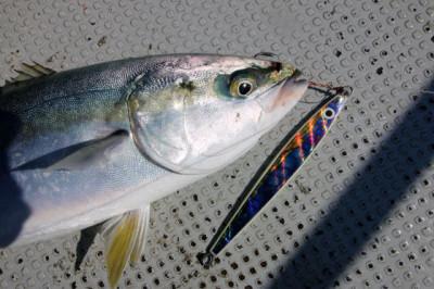 西岡遊漁の2021年5月30日(日)5枚目の写真