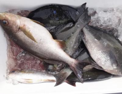 丸銀釣りセンターの2021年6月6日(日)2枚目の写真