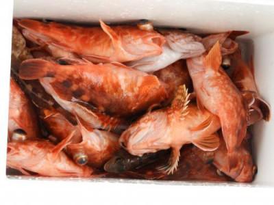 釣具の海友の2021年6月5日(土)2枚目の写真