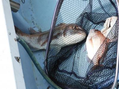 釣具の海友の2021年6月6日(日)3枚目の写真
