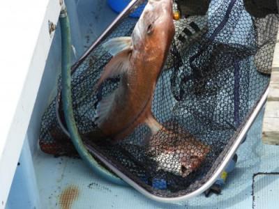 釣具の海友の2021年6月6日(日)4枚目の写真