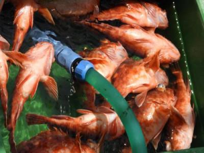 釣具の海友の2021年6月7日(月)3枚目の写真