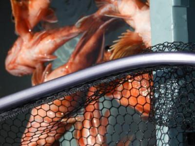釣具の海友の2021年6月7日(月)4枚目の写真