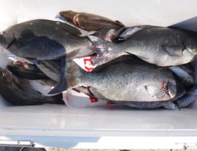 丸銀釣りセンターの2021年6月9日(水)3枚目の写真