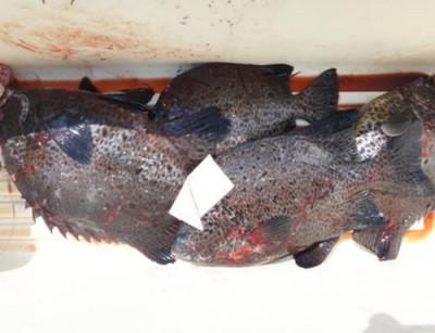 丸銀釣りセンターの2021年6月9日(水)4枚目の写真