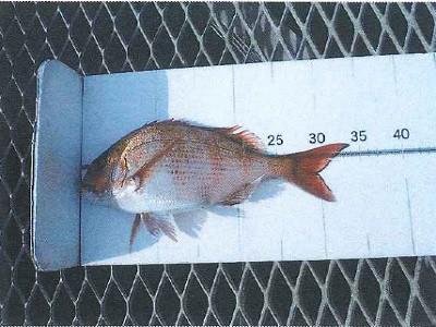 脇田海釣り桟橋の2021年4月8日(木)1枚目の写真