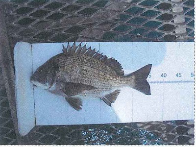 脇田海釣り桟橋の2021年4月15日(木)1枚目の写真