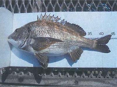 脇田海釣り桟橋の2021年4月19日(月)1枚目の写真