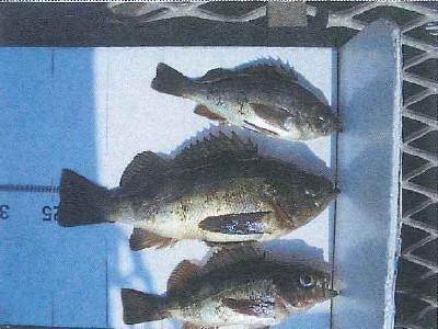 脇田海釣り桟橋の2021年4月19日(月)2枚目の写真