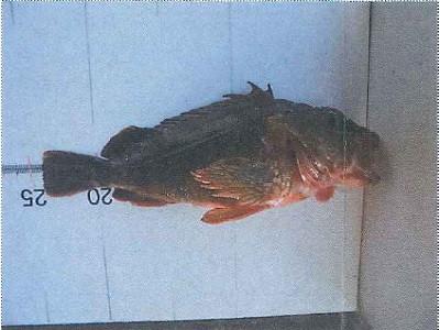 脇田海釣り桟橋の2021年4月21日(水)1枚目の写真