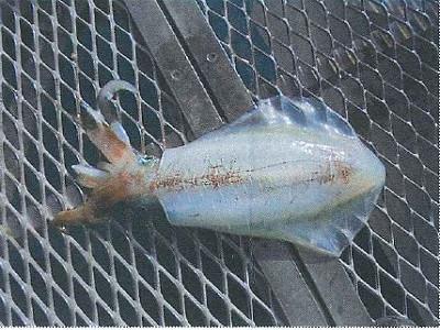 脇田海釣り桟橋の2021年5月10日(月)1枚目の写真