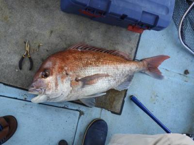 釣具の海友の2021年6月10日(木)5枚目の写真
