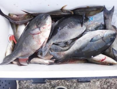 丸銀釣りセンターの2021年6月10日(木)2枚目の写真