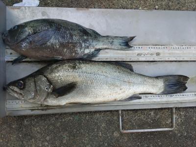 マルヒサ渡船の2021年6月11日(金)2枚目の写真